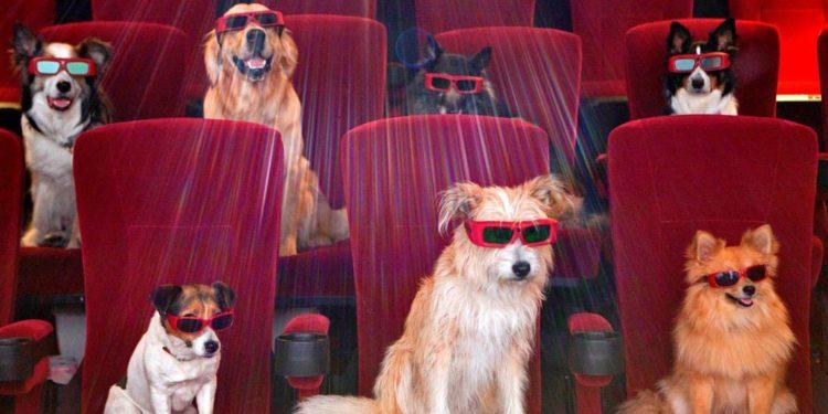 pet watching movie