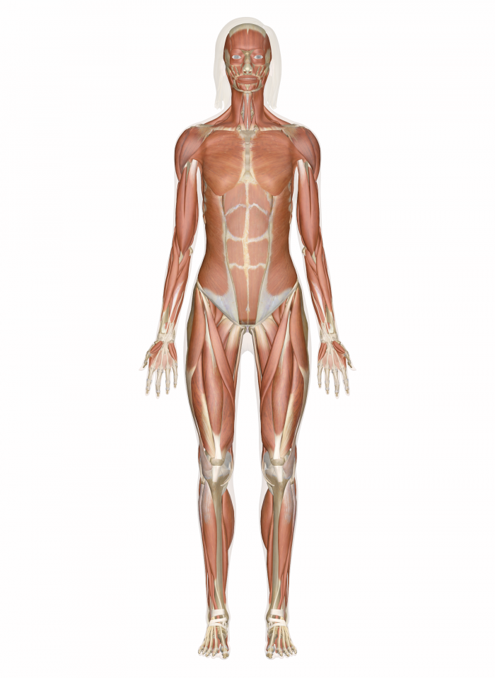 5 Facts You Should Know About The Human Body